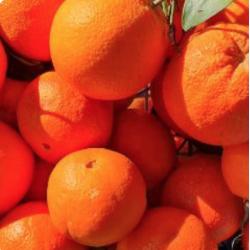 orange a jus caisse de 10kg