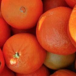 Orange amère kg