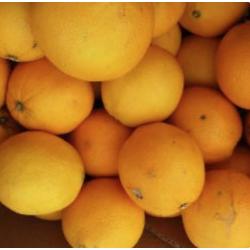 orange bio primeur kg