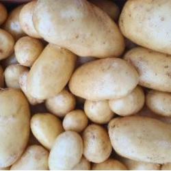 pommes de terre bintje kg...