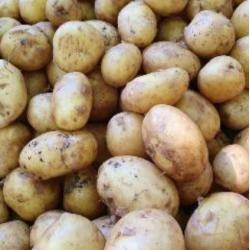 pommes de terre grenaille...