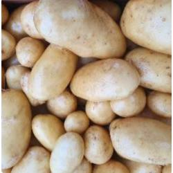pommes de terre nouvelles...