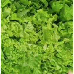 salade maraichage