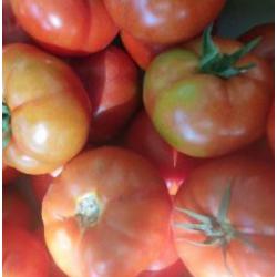tomate Ronde kg